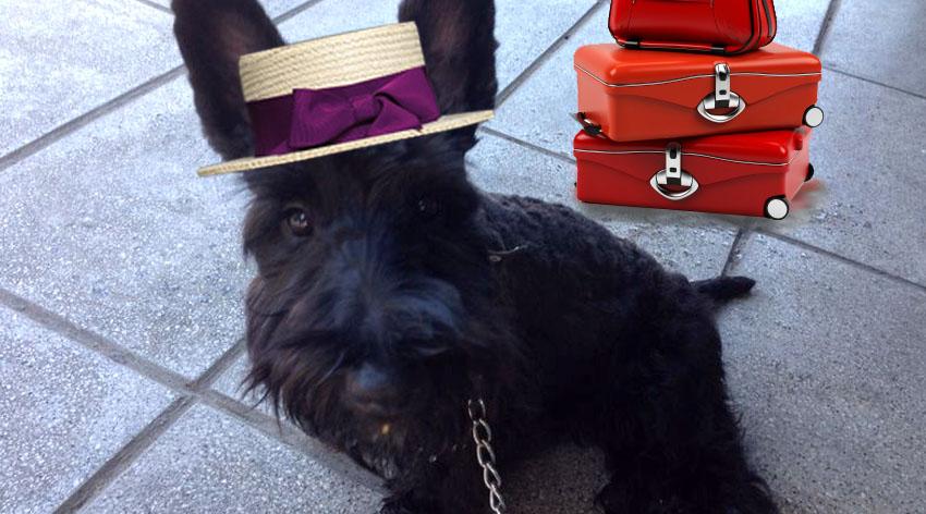 De viaje con tu perro